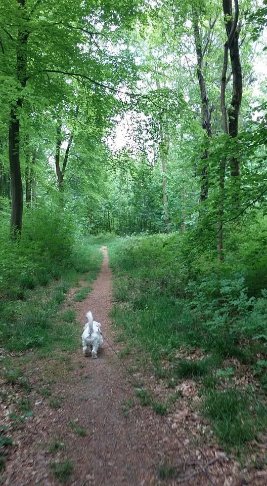 Ernie forest