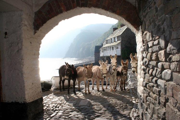 Clovelly Donkeys